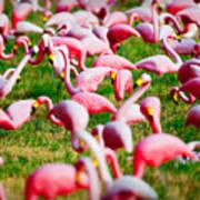 Flamingo 6 Poster