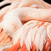 Flamingo Abstract Poster