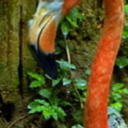 Flamingo Close Up Profile Poster