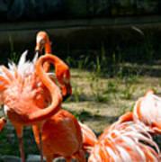Flamingo Colony Poster