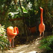 Flamingo Duo Poster