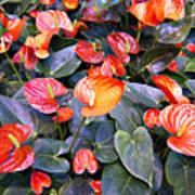 Flamingo Flower Bed Poster