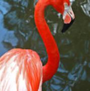 Flamingo In Profile Poster