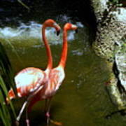 Flamingo Pair Poster