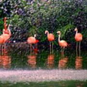 Flamingos II Poster