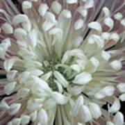 Fleur De Feu 3 Poster