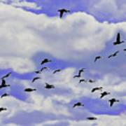 Flight Over Lake Poster