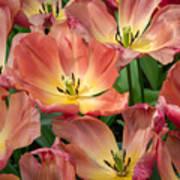 Flighty Tulips Poster