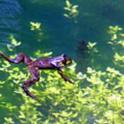 Floating Frog Poster