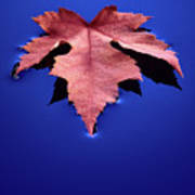 Floating Leaf 2 - Maple Poster