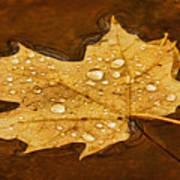 Floating Maple Leaf Txt Poster