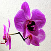 Floating Orchid Poster