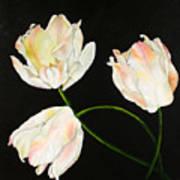 Flora Blanca 3  Poster