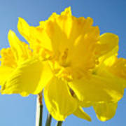 Floral Art Bright Yellow Daffodil Flowers Baslee Troutman Poster
