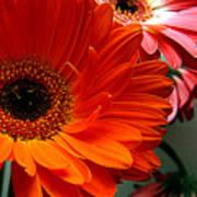 Floral Art Poster