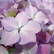 Floral Art Hydrangea Flowers Purple Lavender Baslee Troutman Poster