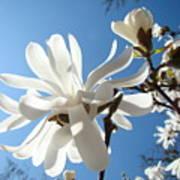 Floral Art Print Landscape Magnolia Tree Flowers White Baslee Troutman Poster