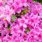 Floral Art Prints Pink Azalea Garden Landscape Baslee Troutman Poster