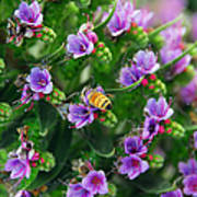 Floral Beehive Poster