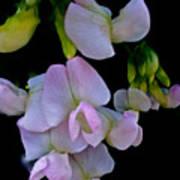 Floral Cascade Poster