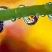 Floral Drop Trio  8054 Poster