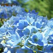 Floral Fine Art Blue Hydrangeas Baslee Troutman Poster