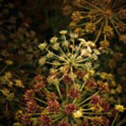 Floral Fireworks #02 Poster