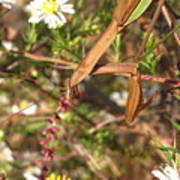 Floral Mantis Poster