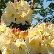 Floral Rhododendrons Fine Art Photography Art Prints Baslee Troutman Poster