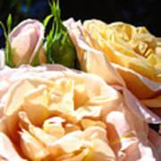 Floral Roses Garden Art Prints Baslee Troutman Poster
