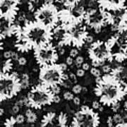 Floral Texture In Black And White Poster