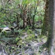 Florida Landscape - Lithia Springs Poster