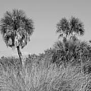 Florida Landscape Poster