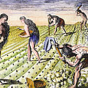 Florida Natives, 1591 Poster