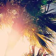 Florida Palm Poster