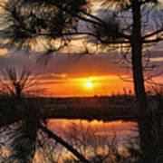 Florida Pine Sunset Poster