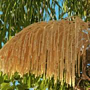Florida Queen Palm Flower  Poster
