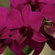 Flower 127 Poster