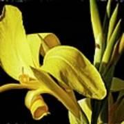 Flower 29f, Ny, 16 Poster
