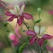 Flower 3506_2 Poster
