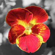 Flower 5 - Reverse Black And White Poster