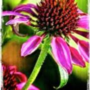 Flower 70f Poster