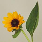 Flower 8-11 Poster