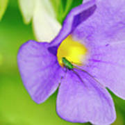 Flower And Grasshopper-st Lucia Poster