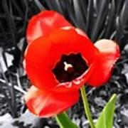 Flower As Art Poster