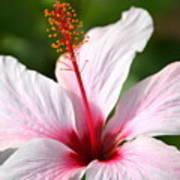 Flower Beauty2 Poster