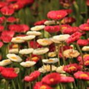 Flower Bed Poster