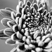 Flower Black And White Poster