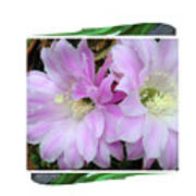 Flower Blossom Pink Poster