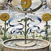 Flower Clock, 1643 Poster